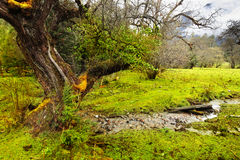 The color of green in tibet. In rain Royalty Free Stock Photos
