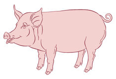 Color hand drawing of domestic pig Royalty Free Stock Photography