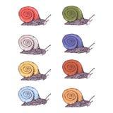 Color hand drawn snails set. Hand drawn snails in color vary set vector illustration