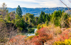 Color harmony, autumn colors Stock Photography