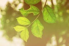 Color hermoso de las hojas en Surat Thani Tailandia foto de archivo libre de regalías