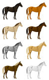 Color horse set Royalty Free Stock Images