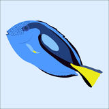 Color icon blue aquarium sea fish cartoon on a white background. Stock Photos