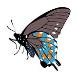 Color icon gray beautiful blue butterfly on a white background. Royalty Free Stock Photo