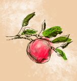 Color illustration of an apple Stock Images