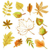 Color illustration of autumn leaves Royalty Free Stock Image