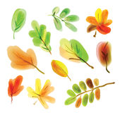 Color illustration of autumn leaves Royalty Free Stock Images