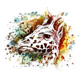 Color illustration of a giraffe head Royalty Free Stock Image