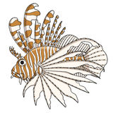 Color illustration lionfish. EPS10 Royalty Free Stock Images