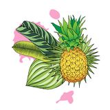 Color illustration of pineapple and tropical leaves stock photography