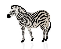 Color illustration of a zebra Royalty Free Stock Photo