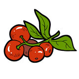 Color image, cartoon berry, Cranberries. Color image, vector cartoon berry, Cranberries Royalty Free Stock Image