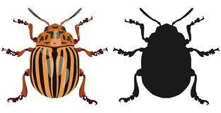 Color image of Colorado beetle and its silhouette. Vector illustration. Stock Photography