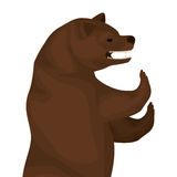 Color image with half body bear Royalty Free Stock Image