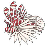 Color image lionfish. EPS10 Stock Image