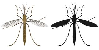 Color image of mosquito and its silhouette. Vector illustration. Stock Images