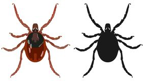 Color image of the tick and its silhouette. Vector illustration. Stock Photos