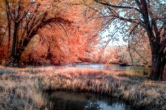 Free Color Infrared Photograph Of The St. Croix River Valley, Minnesota Royalty Free Stock Image - 117745616