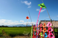 Color kite Stock Image