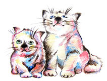 Color kittens. Color pencil scetch of two sitting kittens Royalty Free Stock Image