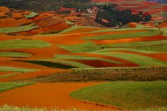 Color Land. Wheat Field on the Red Land in Yunnan Province, southwest of China Royalty Free Stock Image