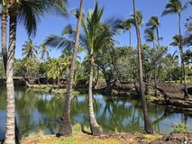 Palm trees and lagoon in Hawaii USA. Color landscape photo of Hawaiian lagoon surrounded by palm Royalty Free Stock Image