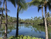 Hawaiian lagoon with palm trees. Color landscape photo of a Hawaiian lagoon surrounded by palm trees on the Big Island of Hawaii USA Stock Image