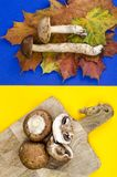 Color layout of wild and cultivated mushrooms. Studio Photo stock photo