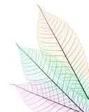 Color leaf. With stem only, graphic shot Stock Image