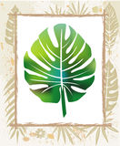 Color leaf in a frame. Made of natural objects vector illustration