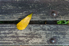 Color leaf on wood planks Royalty Free Stock Images