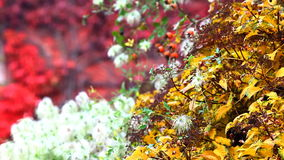 Color leafs, flowers, at autumn prague stock video