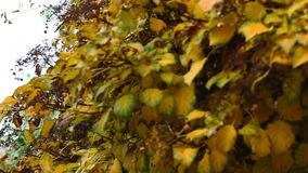 Color leafs, flowers, at autumn prague stock footage