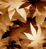 Color leaves Stock Photos