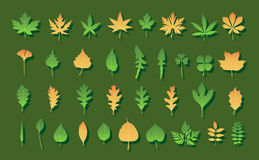 Color Leaves Royalty Free Stock Images