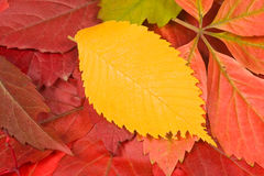 Color leaves background, autumn composition Stock Photography