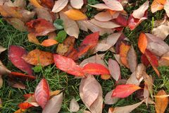 Color leaves on the Ground. In the Park Royalty Free Stock Photos