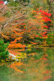 Color Leaves and Reflection at Kinkakuji Temple Royalty Free Stock Photo