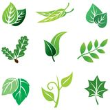 Color leaves set Royalty Free Stock Photo