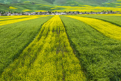 Color and line  in farmland Stock Photos
