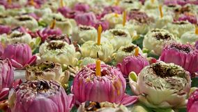 2 color of lotus. It's make me relex when i see this picture Stock Photography
