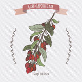Color Lycium barbarum aka Goji berry sketch. Royalty Free Stock Images