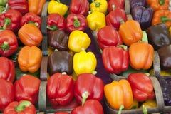 color mång- peppar Fotografering för Bildbyråer