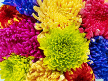 Color. Many of color flower beauty amazing Royalty Free Stock Photos