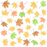 Color maple leaves  collection Stock Photo