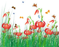 Color meadow Stock Image