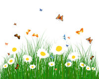 Color meadow Royalty Free Stock Photo