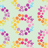 Color meadow flowers seamless pattern. Stock Images
