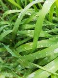 Color mojado de la hierba Fotografía de archivo