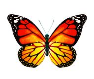 Color monarch butterfly , isolated on the white